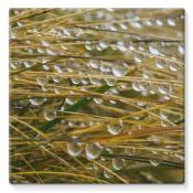 water-droplets-in-the-straw-stretched-canvas-10x10-kite-wall-decor-ly-artpics_406_grande